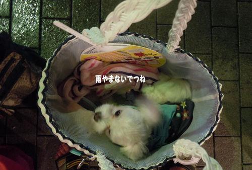 2011.7.30.jpg